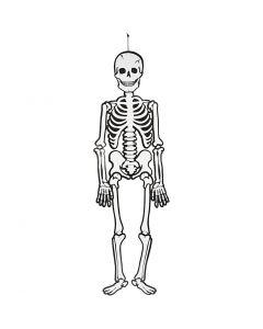 Skelet, H: 120 cm, 300 gr, wit, 1 stuk