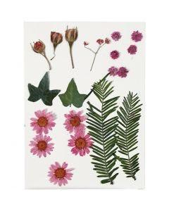 Gedroogde bloemen en bladeren, lichtrood, 19 div/ 1 doos