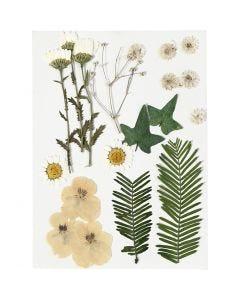 Gedroogde bloemen en bladeren, off-white, 19 div/ 1 doos