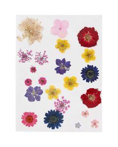 Gedroogde bloemen, diverse kleuren, 1 doos