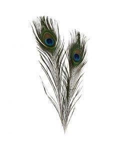 Pauwenveren, L: 25-30 cm, 10 stuk/ 1 doos