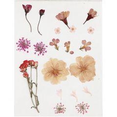 Gedroogde bloemen, lichtroze, 1 doos