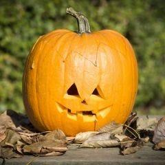 Een echte Halloween pompoen