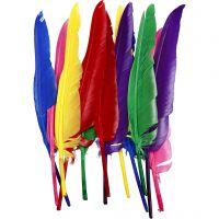 Veren, L: 27 cm, diverse kleuren, 12 stuk/ 1 doos